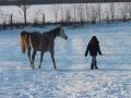 winteroldenrode-07