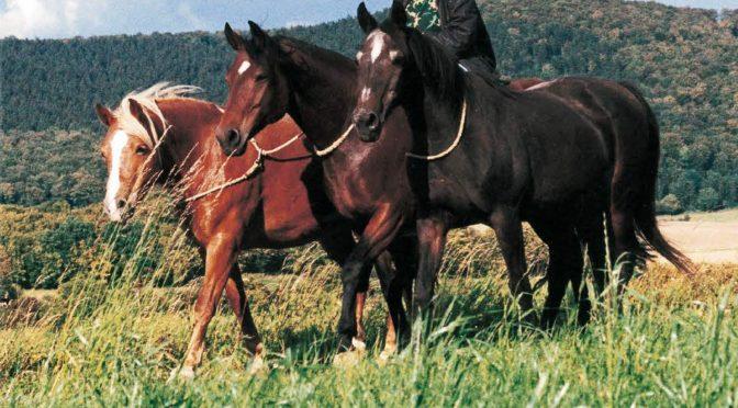 """Endlich erschienen: das Englische Buch ist jetzt erhältlich! """"Being with Horses … the mutual way to an extraordinary connection"""""""