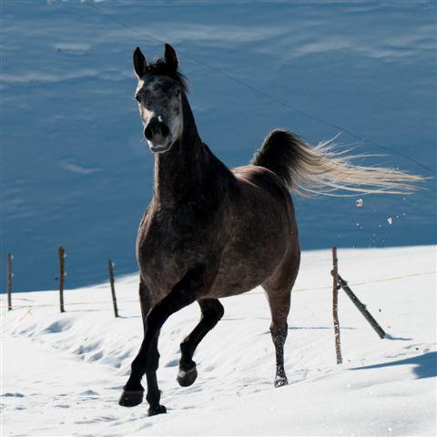 pferd1-4