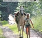Mit Pferden sein3-V7DRUCK-Cover