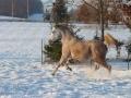 winteroldenrode-01