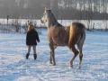 winteroldenrode-02